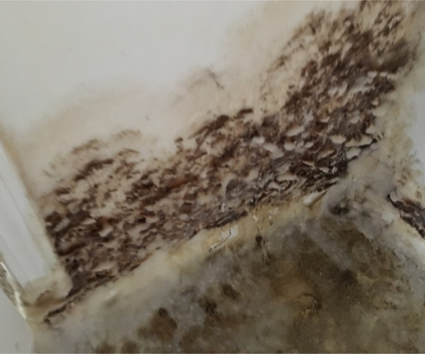 White Fuzzy Mold Growth Destin Fl